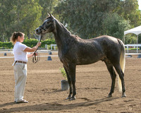 Sports Horse In-Hand
