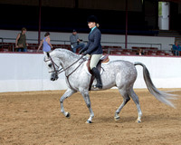 Class 64 Arabian Hunter Pl - JTR Choice/Elite
