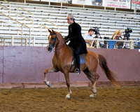 Class 9 Arabian Country English Pleasure - Jr Horse 5 Yrs & Under