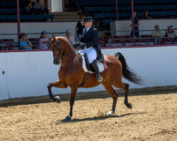 Class 107 HA English Show Hack - AATR 19 & Over