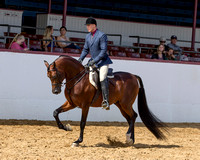 Class 69 Arabian Hunter Pl - Gentlemen to Ride