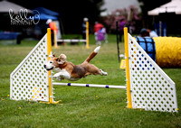 Sonoma County Agility Club August 2016