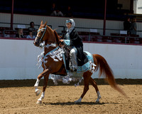 Class 312 HA Mounted Native Costume Championship