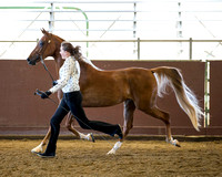 Class 192 HA Fillies & Mares - All ages JTH