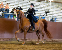 Class 104 HA Country English Pleasure - JTR 18 & Under