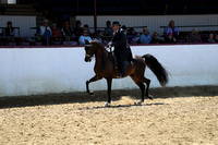Class 252 - Arabian Country English Pl/Jr Horse 5 & Under