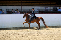 Class 86 - Arabian Country English Pl/Jr Horse 5 Yrs & Under