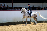 Class 106 - English Show Hack - AATR 19 Yrs/Over