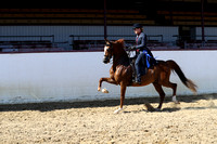 Class 119 - HA Country English Pl/Mares & Geldings