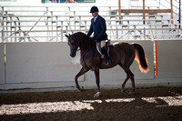 Class 4 Arabian Hunter Pleasure Jr Horses