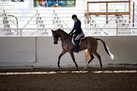 Class 6 HA/AA Hunter Pleasure Geldings