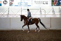 Class 10 Arabian Hunter Pleasure Novice Horses