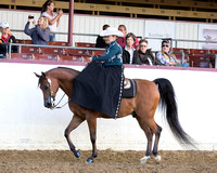 Class 307 - Arabian Ladies Side Saddle/ATR