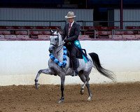 Class 221 - HA Country English Pl/Jr Horse 5 & Under