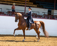 Class 114 Saddle Seat Eq - JTR 18 & Under