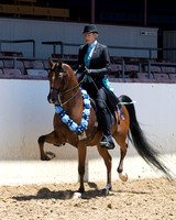 Class 390 - Arabian Country English Pl/Geldings