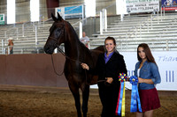 Class 96 & 97 - HA Gelding In-Hand/4 Yrs & Over/ATH/Championship