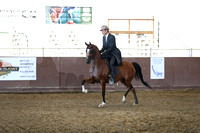 Class 9 - Arabian Country English Pl/Jr Horse 5 & Under