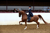 Class 281 - Saddle Seat Equitation - JTR 18 yrs. & Under
