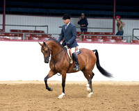 Class 63 HA Hunter Pl - Limit Horse