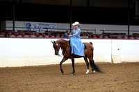 Class 242 - Arabian Ladies Side Saddle
