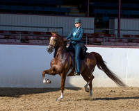 Class 120 HA Country English Pl - Mares & Geldings